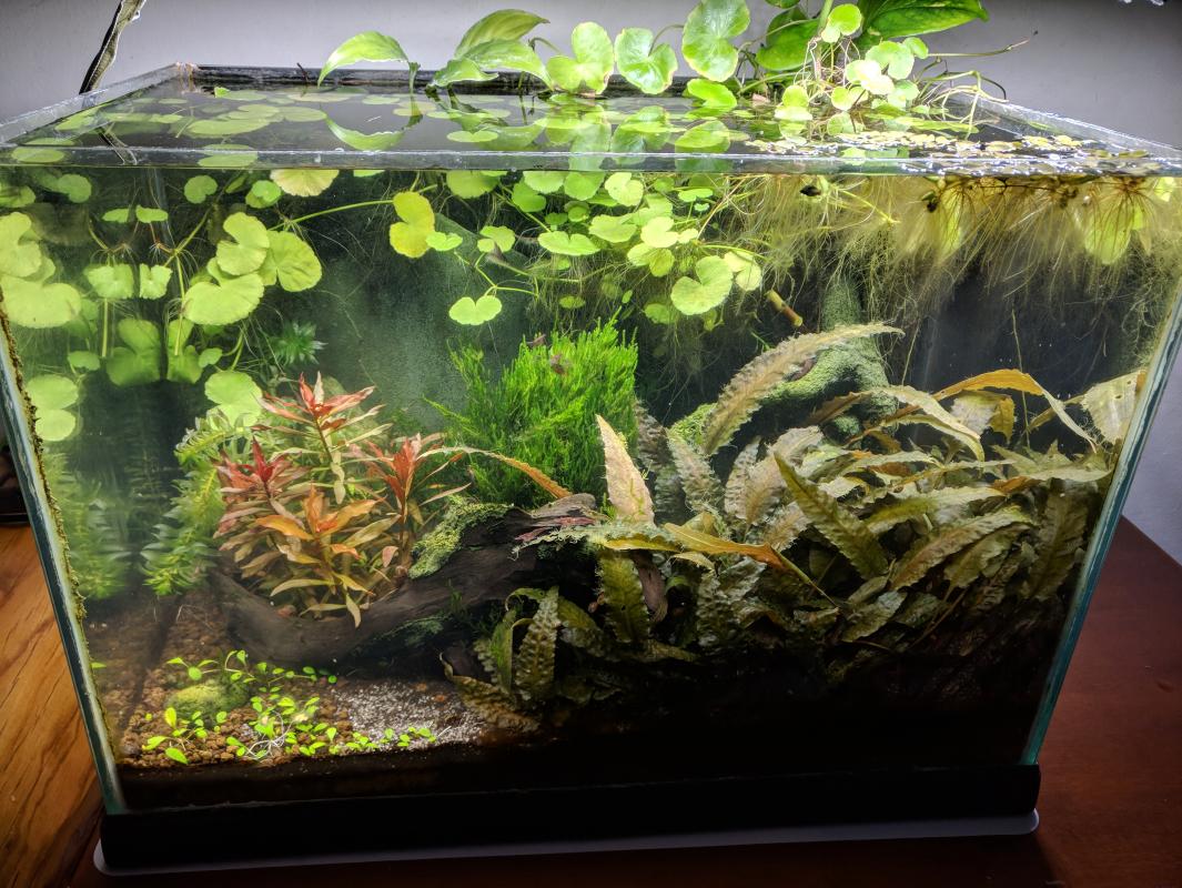 Plafoniere Per Acquari Aperti : Caridinaio litri aperto mostraci il tuo acquario forum