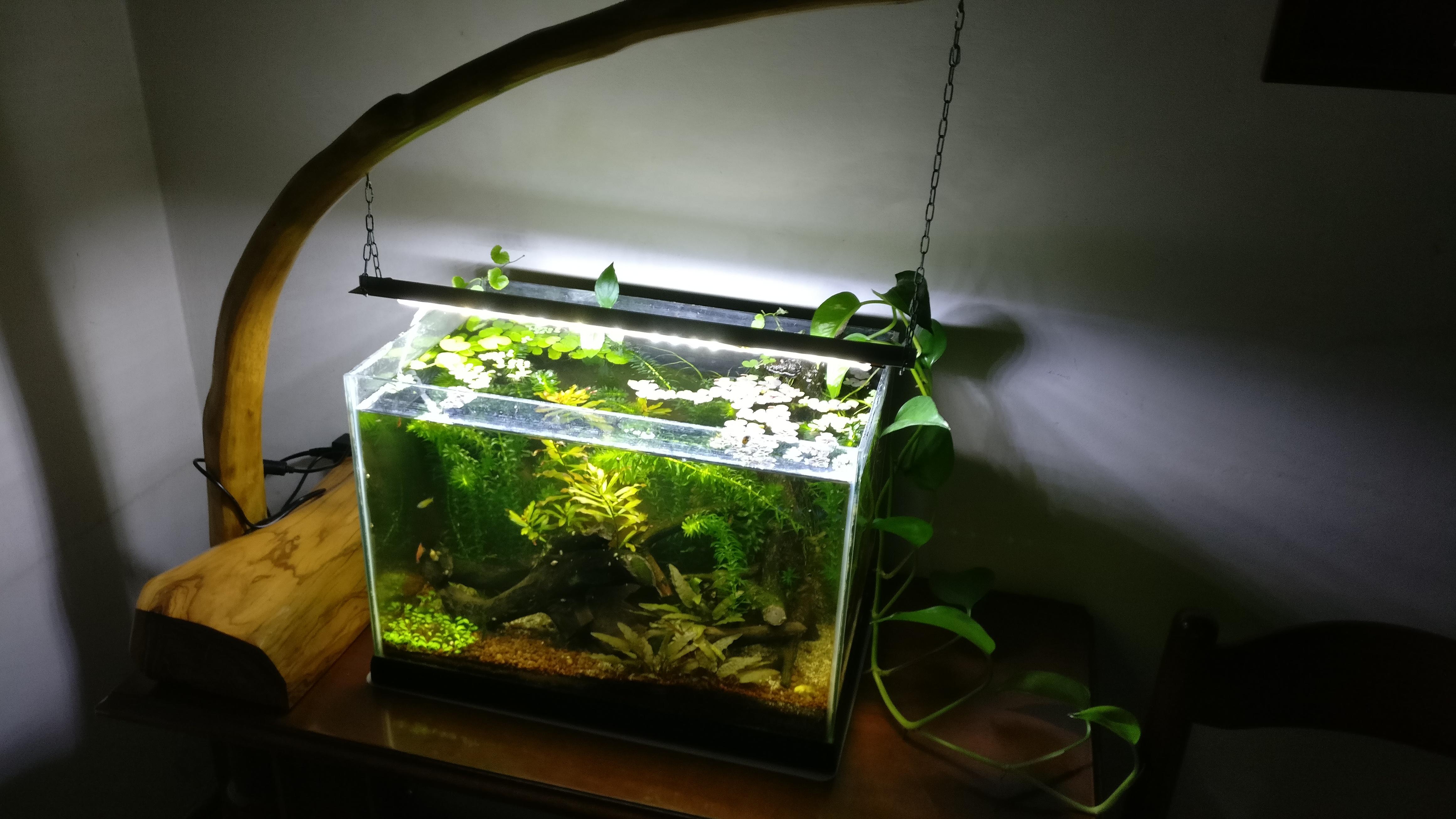 Plafoniere Per Acquari Aperti : Plafoniera per acquario aperto °neon